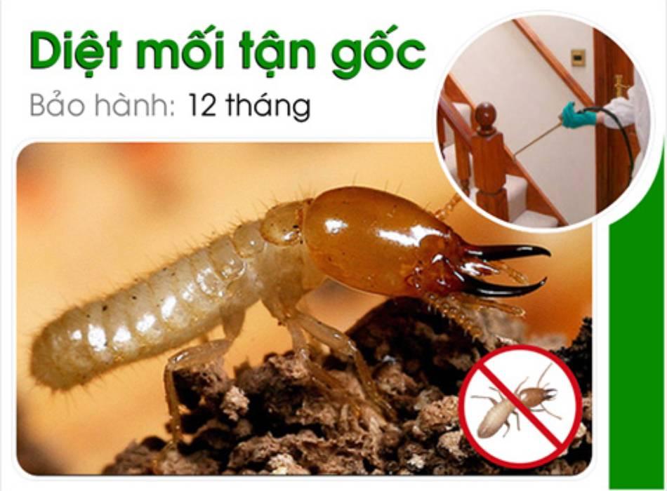 Cung cấp dịch vụ diệt mối trọn gói giá rẻ kèm diệt các loại côn trùng khác