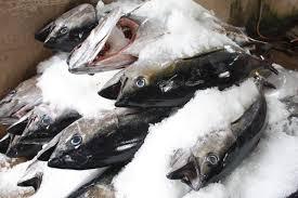 Lưu ý khi mua cá biển đông lạnh nhập khẩu.